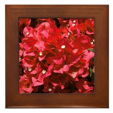 Red Bougainvillea Framed Tile