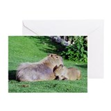 Capybara Snooze Greeting Cards (Pk of 10)