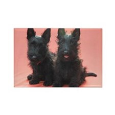 Scottish Terriers Rectangle Magnet