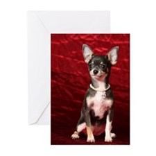Cute Coat of Greeting Cards (Pk of 10)