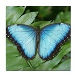 Blue Morpo Tropical Butterfly Tile Coaster
