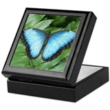Blue Morpo Tropical Butterfly Keepsake Box