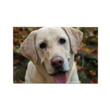 Cute Yellow labrador Rectangle Magnet