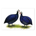 Royal Purple Guineas Postcards (Package of 8)