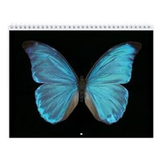 Tropical Butterfly Collection Wall Calendar