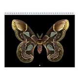 Tropical Moth Collection Wall Calendar