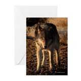 ''The Hunter'' Greeting Cards (Pk of 20)