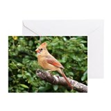 Female Cardinal Greeting Cards (Pk of 20)
