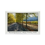Tree Lined Vineyard Road, Napa Valley 100 Magnets