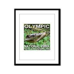 Kissing Slugs? Look Again. Olympic NP Framed Panel