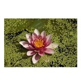 Water Lilly Postcards (Package of 8)