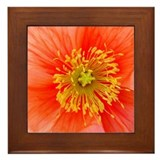 Poppy Framed Tile