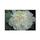 Peony Rectangle Magnet