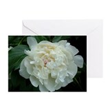 Peony Greeting Cards (Pk of 10)