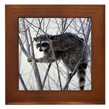 Rascally Raccoon Framed Tile