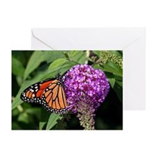 Monarch Butterfly Greeting Cards (Pk of 20)