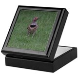 Northern Flicker Keepsake Box