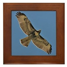 Red-Tailed Hawk Framed Tile