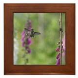 Rufous Hummingbird Framed Tile