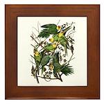 Audubon's Carolina Parakeet Framed Tile