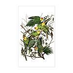 Audubon's Carolina Parakeet Rectangle Sticker