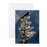 """Colibri"" Blank Greeting Cards (Pack of 6)"
