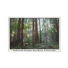 redwood trees botanical photography magnets (10)
