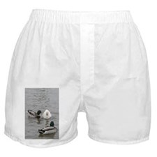 Cute Funny jokes Boxer Shorts