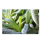 Aloe Vera Postcards (Package of 8)