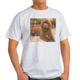 Cute Brown newf T-Shirt
