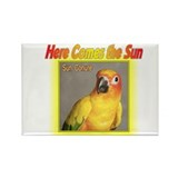 Sun Conure Rectangle Magnet (100 pack)
