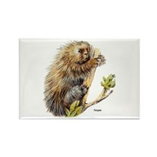 Porcupine Rectangle Magnet