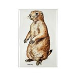 Prairie Dog Rectangle Magnet (10 pack)