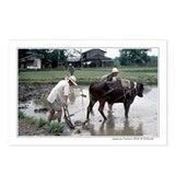 Japanese farmers w/water buffalo postcards