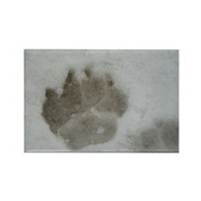 Puppy Paw Prints Rectangle Magnet