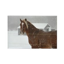 Yearling Rectangle Magnet