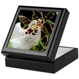 Ocelot Orchid / Keepsake Box