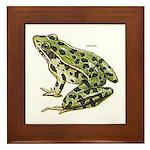 Leopard Frog Framed Tile