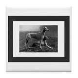 Antique Greyhounds Tile Coaster