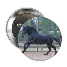 "Dakota-Friesian Stallion 2.25"" Button (10 pack)"