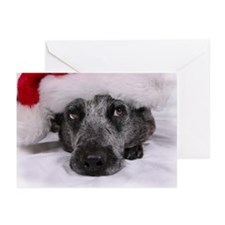Christmas Blue Heeler Greeting Cards (Pk of 20)