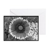 Black and White Floral Photog Greeting Cards (Pack