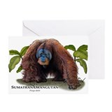 Sumatran Orangutan Greeting Cards (Pk of 10)