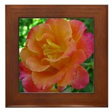 Orange Sunset Rose Framed Tile