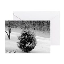 Little Fir and Snow Greeting Cards (Pk of 10)