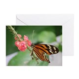 Tiger Longwing Greeting Cards (Pk of 10)