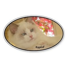 Blue Bicolor Ragdoll Kitten Oval Decal
