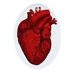 Vintage Anatomical Human Heart Oval Ornament