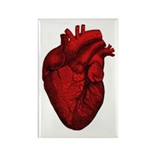 Vintage Anatomical Human Heart Rectangle Magnet