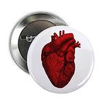 Vintage Anatomical Human Heart 2.25